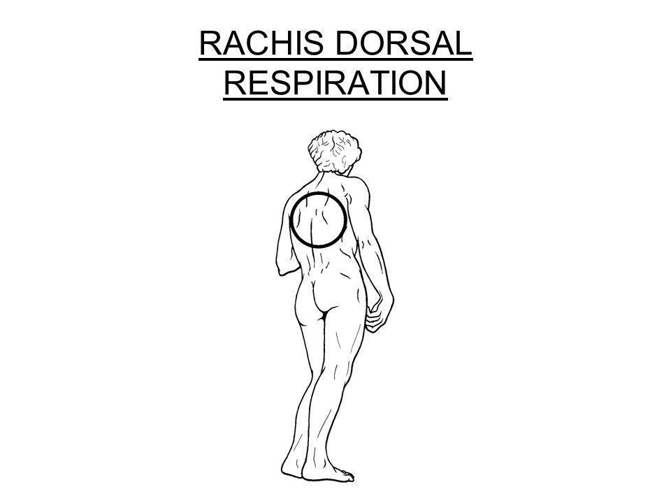RACHIS DORSAL RESPIRATION