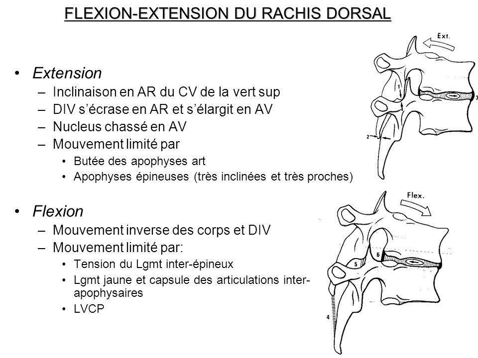 FLEXION-EXTENSION DU RACHIS DORSAL Extension –Inclinaison en AR du CV de la vert sup –DIV sécrase en AR et sélargit en AV –Nucleus chassé en AV –Mouve