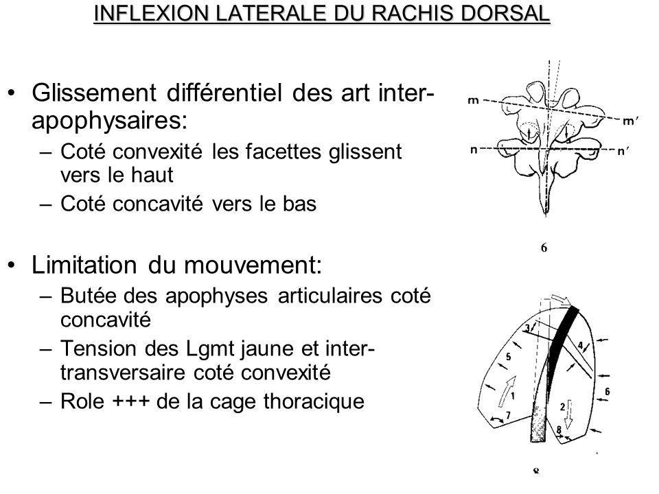 INFLEXION LATERALE DU RACHIS DORSAL Glissement différentiel des art inter- apophysaires: –Coté convexité les facettes glissent vers le haut –Coté conc