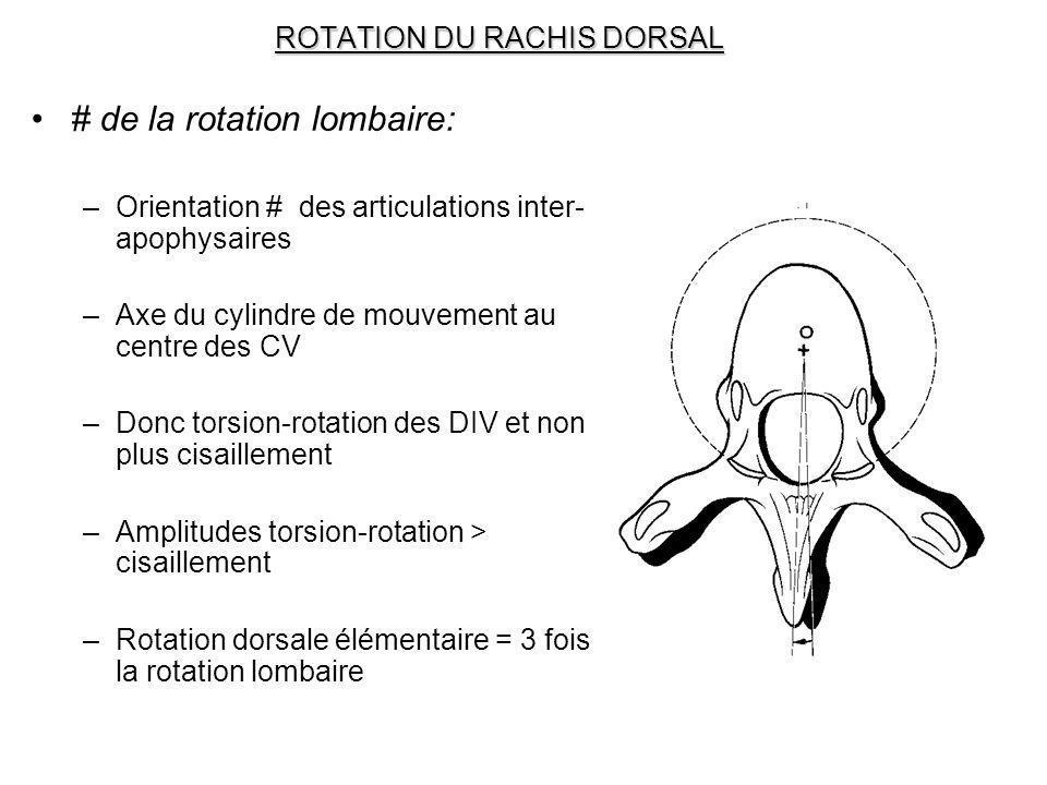ROTATION DU RACHIS DORSAL # de la rotation lombaire: –Orientation # des articulations inter- apophysaires –Axe du cylindre de mouvement au centre des