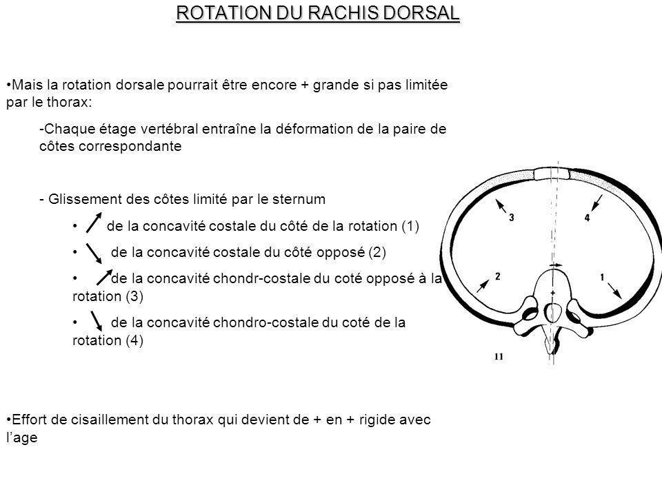 ROTATION DU RACHIS DORSAL Mais la rotation dorsale pourrait être encore + grande si pas limitée par le thorax: -Chaque étage vertébral entraîne la déf