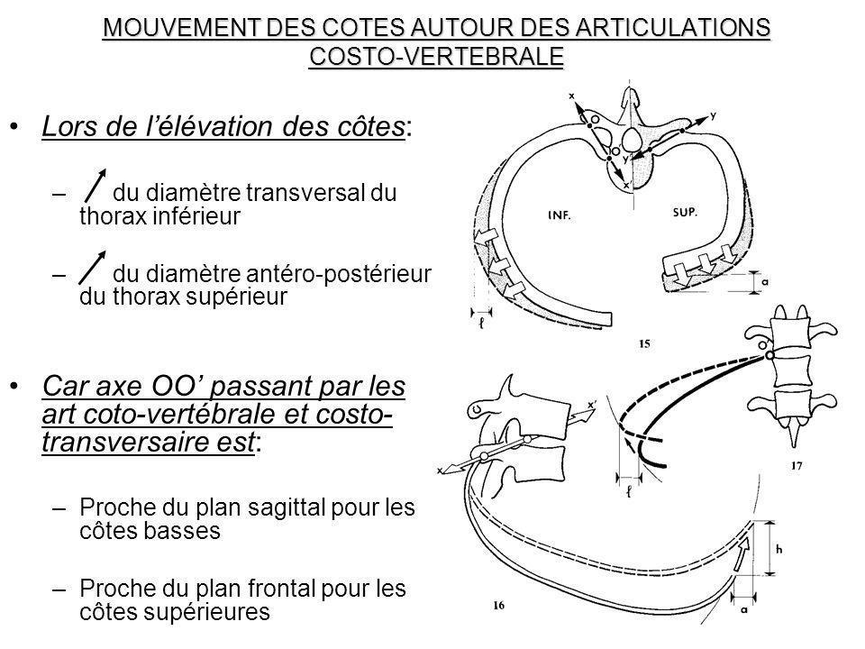 MOUVEMENT DES COTES AUTOUR DES ARTICULATIONS COSTO-VERTEBRALE Lors de lélévation des côtes: – du diamètre transversal du thorax inférieur – du diamètr