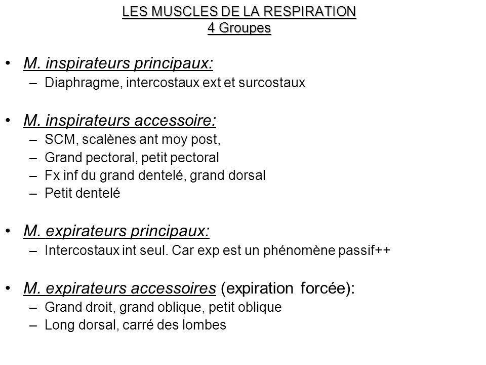 LES MUSCLES DE LA RESPIRATION 4 Groupes M. inspirateurs principaux: –Diaphragme, intercostaux ext et surcostaux M. inspirateurs accessoire: –SCM, scal
