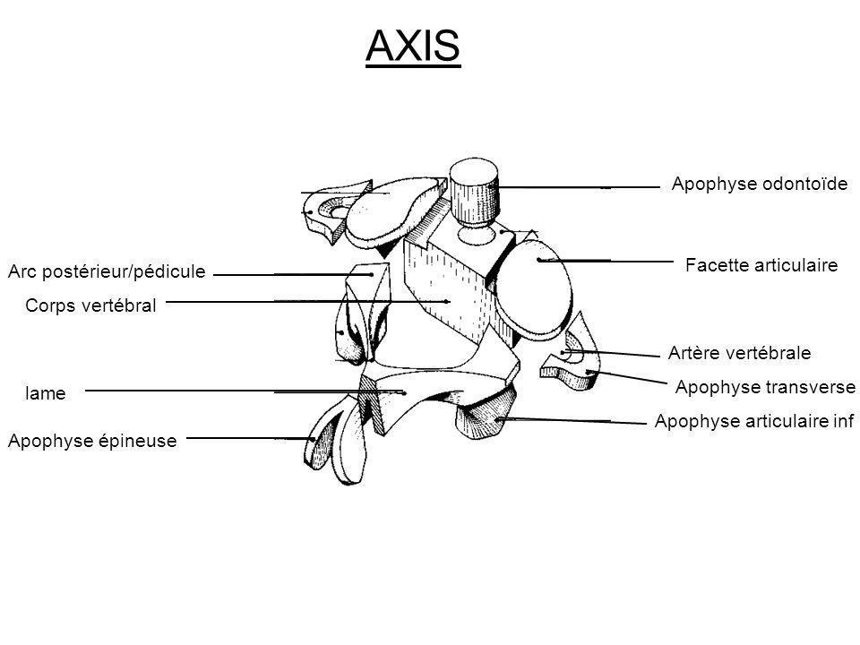 AXIS Corps vertébral Apophyse odontoïde Facette articulaire Arc postérieur/pédicule lame Apophyse épineuse Apophyse articulaire inf Apophyse transvers