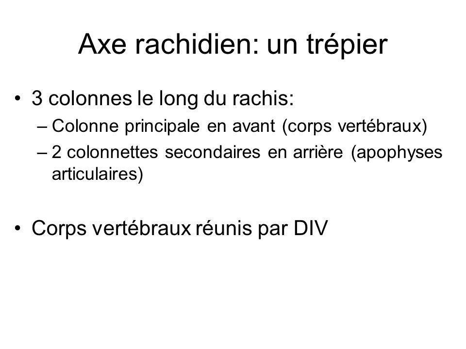Axe rachidien: un trépier 3 colonnes le long du rachis: –Colonne principale en avant (corps vertébraux) –2 colonnettes secondaires en arrière (apophys