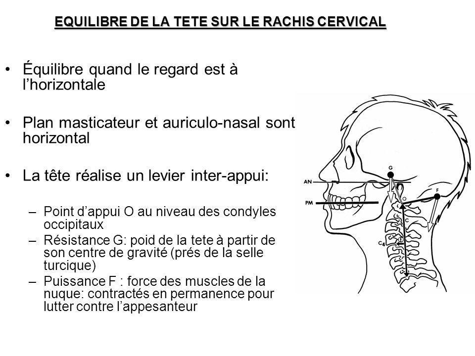 EQUILIBRE DE LA TETE SUR LE RACHIS CERVICAL Équilibre quand le regard est à lhorizontale Plan masticateur et auriculo-nasal sont horizontal La tête ré