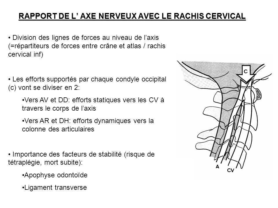 RAPPORT DE L AXE NERVEUX AVEC LE RACHIS CERVICAL Division des lignes de forces au niveau de laxis (=répartiteurs de forces entre crâne et atlas / rach