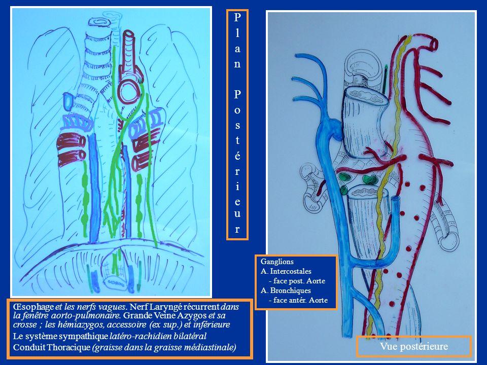 Œsophage et les nerfs vagues. Nerf Laryngé récurrent dans la fenêtre aorto-pulmonaire. Grande Veine Azygos et sa crosse ; les hémiazygos, accessoire (