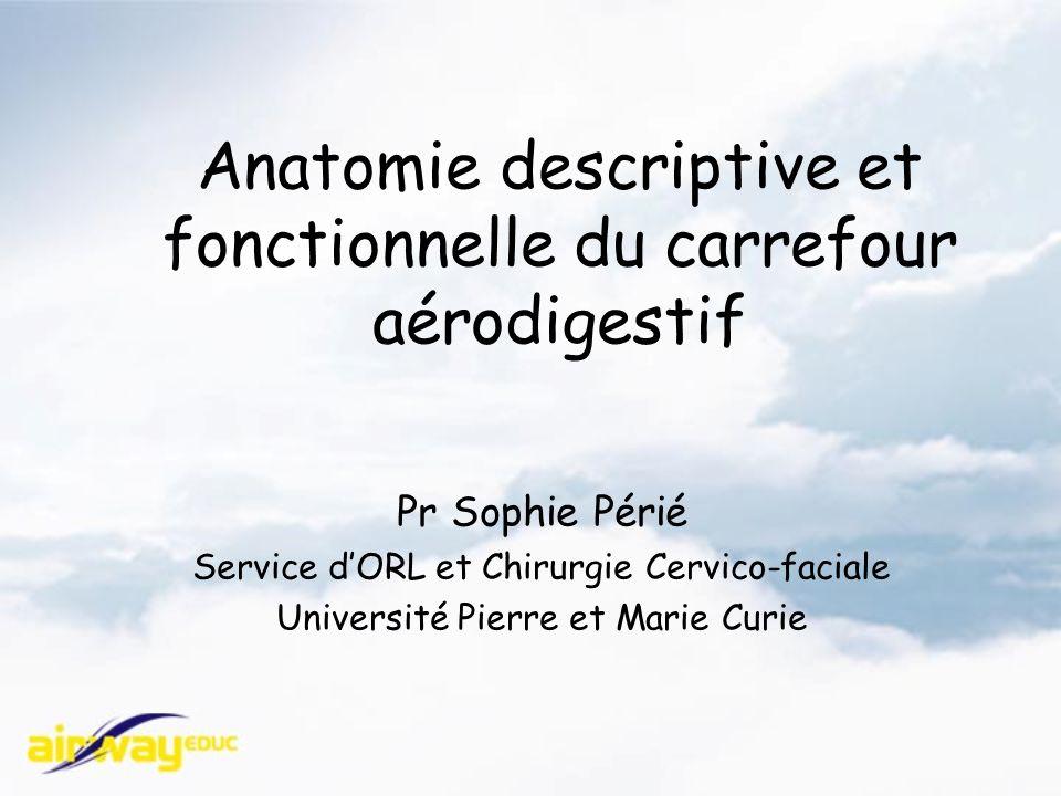Anatomie descriptive et fonctionnelle du carrefour aérodigestif Pr Sophie Périé Service dORL et Chirurgie Cervico-faciale Université Pierre et Marie Curie
