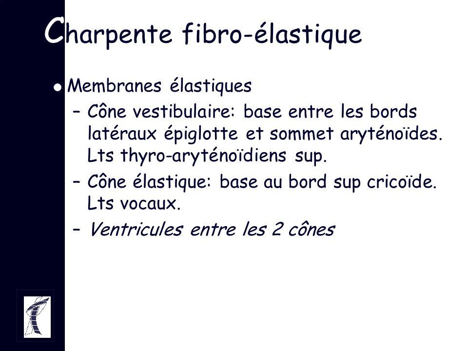 C harpente fibro-élastique Membranes élastiques –Cône vestibulaire: base entre les bords latéraux épiglotte et sommet aryténoïdes. Lts thyro-aryténoïd