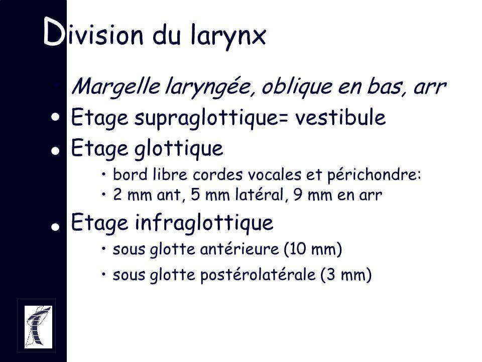 D ivision du larynx Margelle laryngée, oblique en bas, arr Etage supraglottique= vestibule Etage glottique bord libre cordes vocales et périchondre: 2