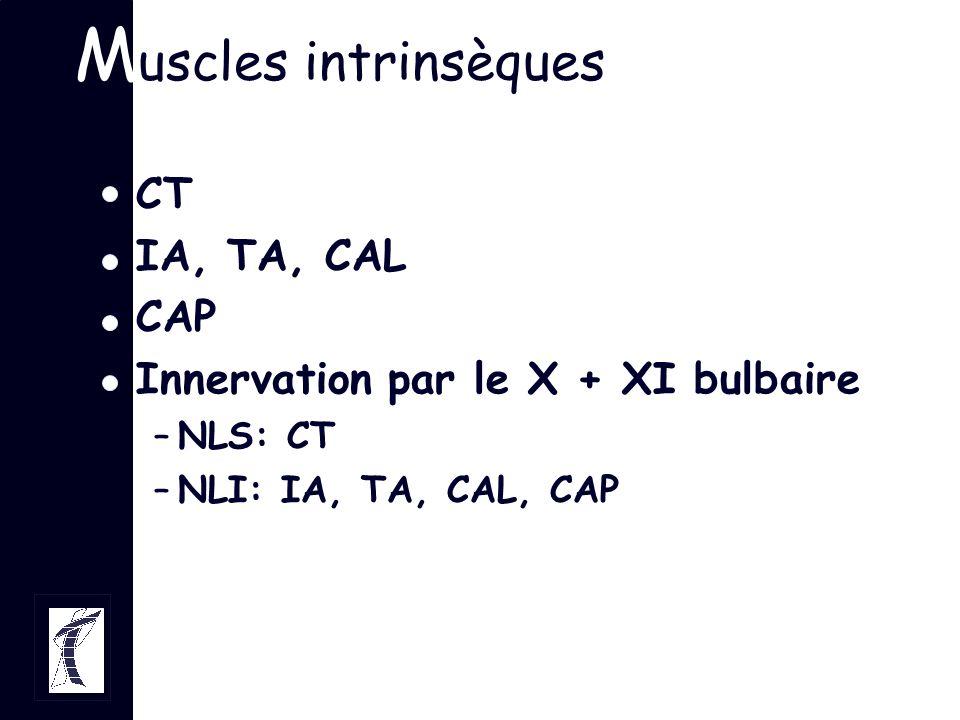 M uscles intrinsèques CT IA, TA, CAL CAP Innervation par le X + XI bulbaire –NLS: CT –NLI: IA, TA, CAL, CAP