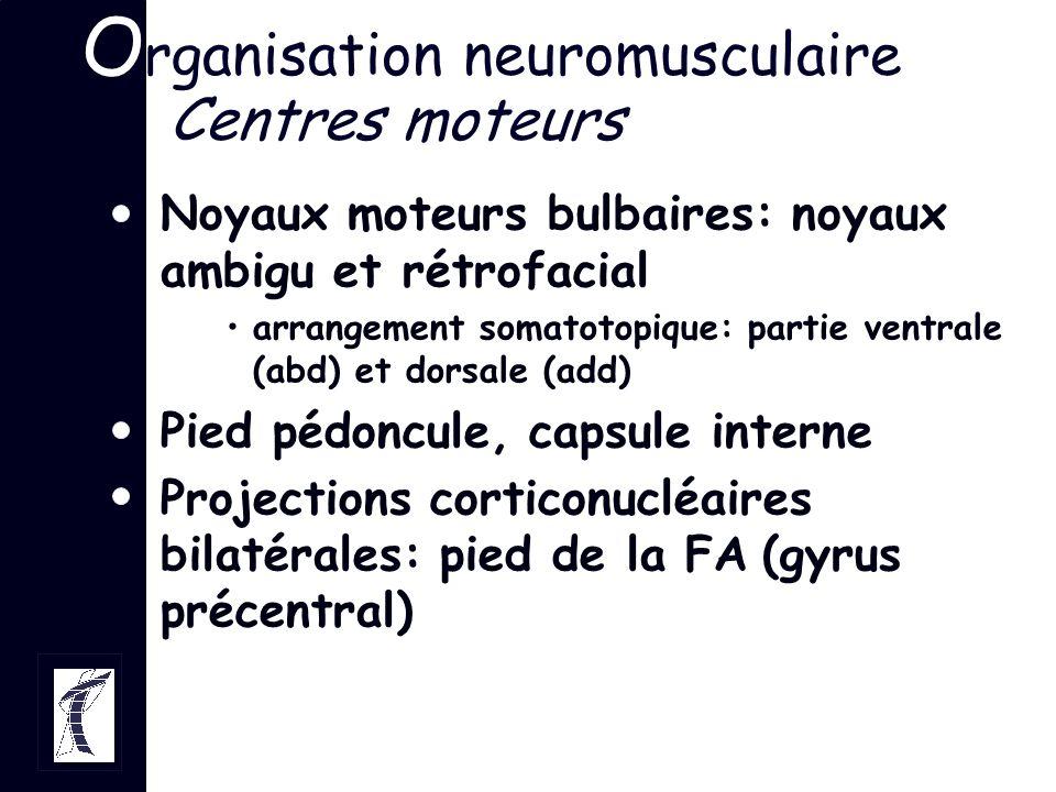 O rganisation neuromusculaire Centres moteurs Noyaux moteurs bulbaires: noyaux ambigu et rétrofacial arrangement somatotopique: partie ventrale (abd)