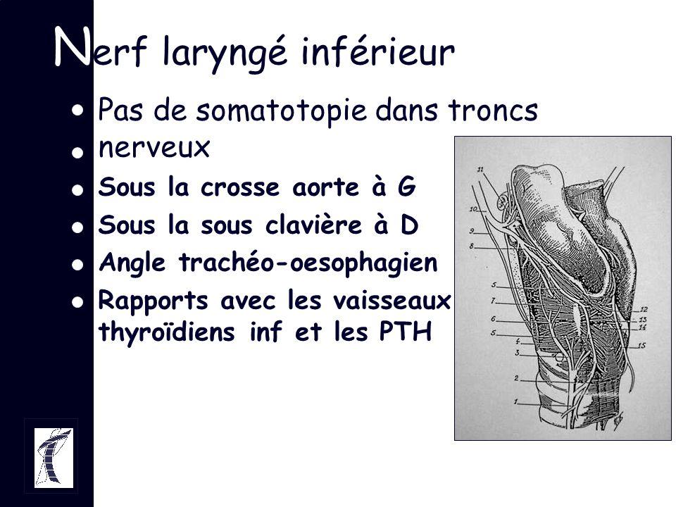 N erf laryngé inférieur Pas de somatotopie dans troncs nerveux Sous la crosse aorte à G Sous la sous clavière à D Angle trachéo-oesophagien Rapports a