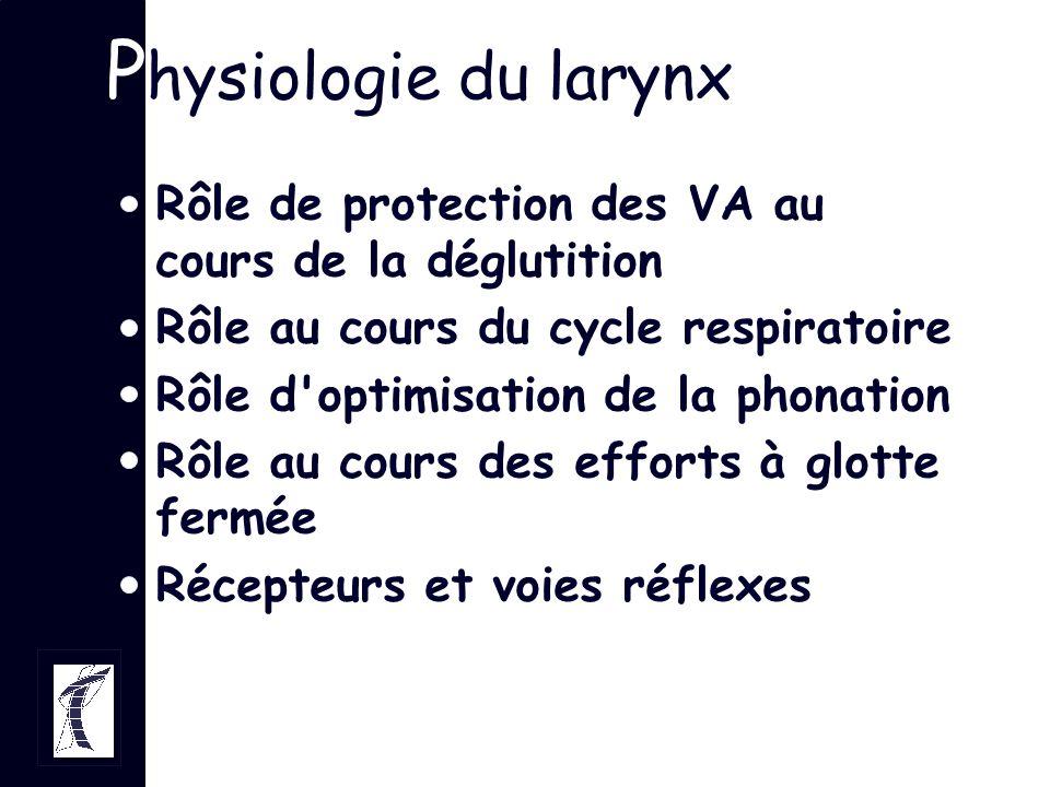 P hysiologie du larynx Rôle de protection des VA au cours de la déglutition Rôle au cours du cycle respiratoire Rôle d'optimisation de la phonation Rô