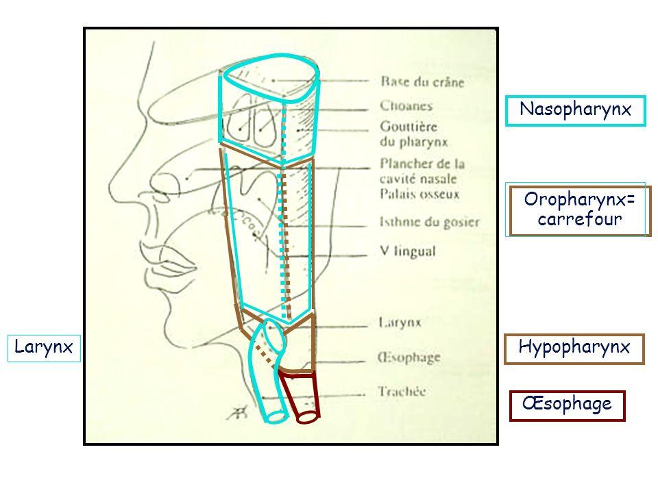 Nasopharynx Oropharynx= carrefour Hypopharynx Œsophage Larynx