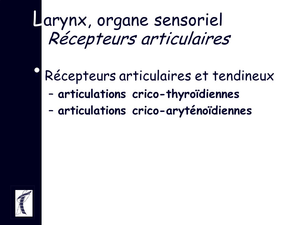 L arynx, organe sensoriel Récepteurs articulaires Récepteurs articulaires et tendineux –articulations crico-thyroïdiennes –articulations crico-aryténo
