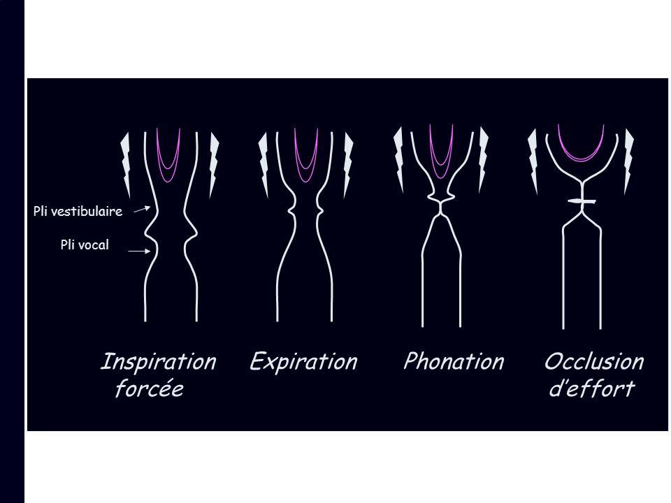 Inspiration Expiration Phonation Occlusion forcée deffort Pli vestibulaire Pli vocal