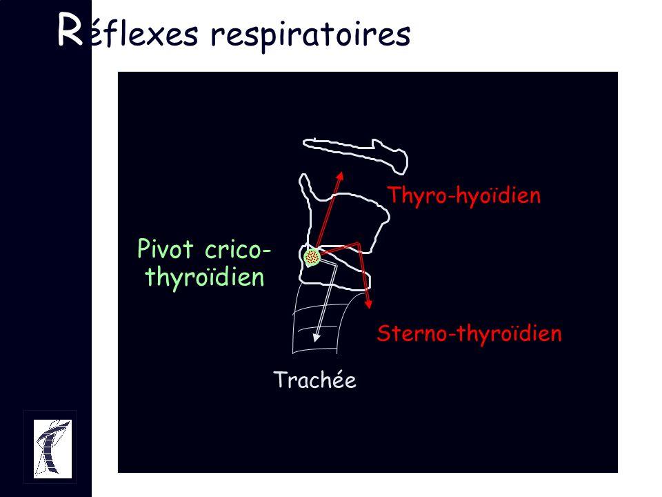 R éflexes respiratoires Pivot crico- thyroïdien Trachée Sterno-thyroïdien Thyro-hyoïdien