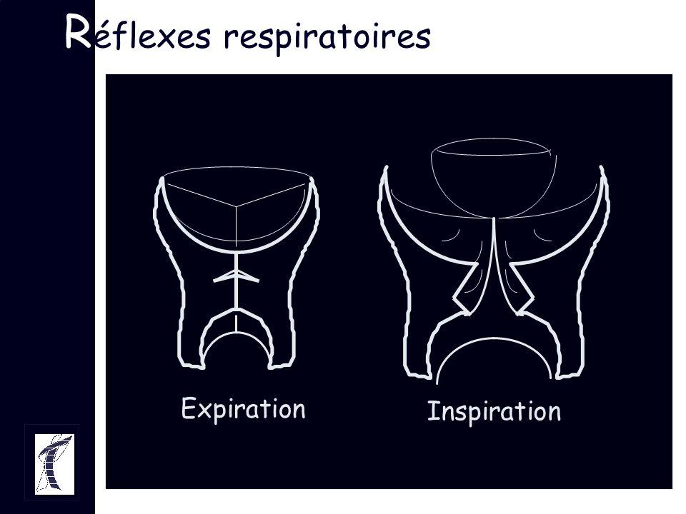 R éflexes respiratoires Expiration Inspiration