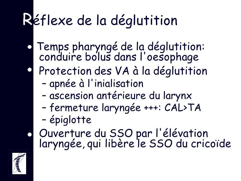 R éflexe de la déglutition Temps pharyngé de la déglutition: conduire bolus dans l'oesophage Protection des VA à la déglutition –apnée à l'inialisatio