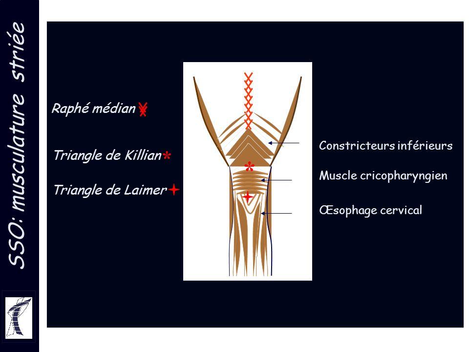 Constricteurs inférieurs Muscle cricopharyngien Œsophage cervical Raphé médian Triangle de Killian Triangle de Laimer SSO: musculature striée * *