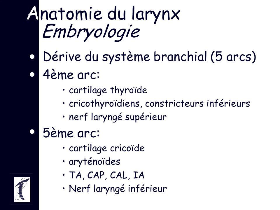 A natomie du larynx Embryologie Larynx identifiable: embryon de 4-5S Muscles laryngés vers 6-7S Innervation, individualisation larynx: 8S Foetogénèse déglutition à 3M myélinisation à 4M développement ligament vocal