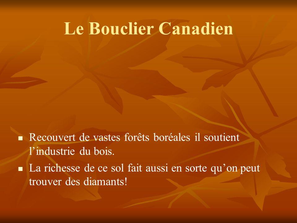 Le Bouclier Canadien Recouvert de vastes forêts boréales il soutient lindustrie du bois.
