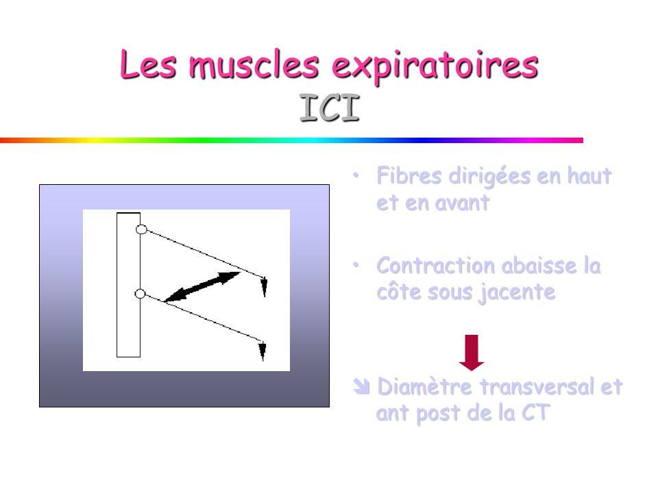 Les muscles expiratoires ICI Fibres dirigées en haut et en avantFibres dirigées en haut et en avant Contraction abaisse la côte sous jacenteContraction abaisse la côte sous jacente Diamètre transversal et ant post de la CT Diamètre transversal et ant post de la CT
