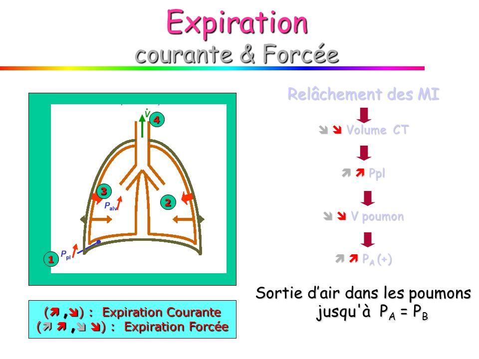 Expiration courante & Forcée 1 2 3 4 Relâchement des MI Volume CT Volume CT Ppl Ppl V poumon V poumon P A (+) P A (+) Sortie dair dans les poumons jusqu à P A = P B (, ) : Expiration Courante (, ) : Expiration Forcée