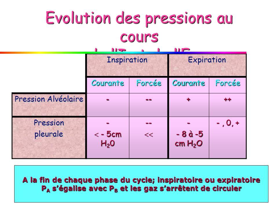 Evolution des pressions au cours de lI et de lE InspirationExpiration CouranteForcéeCouranteForcée Pression Alvéolaire ---+++ Pressionpleurale- - 5cm H 2 0 - 5cm H 2 0--- - 8 à -5 cm H 2 O - 8 à -5 cm H 2 O -, 0, + A la fin de chaque phase du cycle; inspiratoire ou expiratoire P A ségalise avec P B et les gaz sarrêtent de circuler