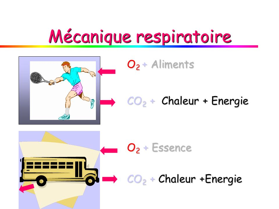 O 2 + Aliments CO 2 + Chaleur + Energie O 2 + Essence CO 2 + Chaleur +Energie