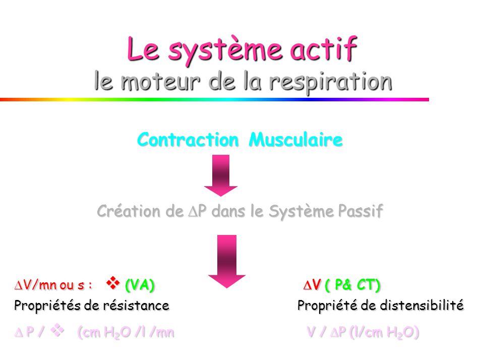 Le système actif le moteur de la respiration Contraction Musculaire Création de P dans le Système Passif V/mn ou s : (VA) V ( P& CT) V/mn ou s : (VA) V ( P& CT) Propriétés de résistance Propriété de distensibilité P / (cm H 2 O /l /mn V / P (l/cm H 2 O) P / (cm H 2 O /l /mn V / P (l/cm H 2 O)