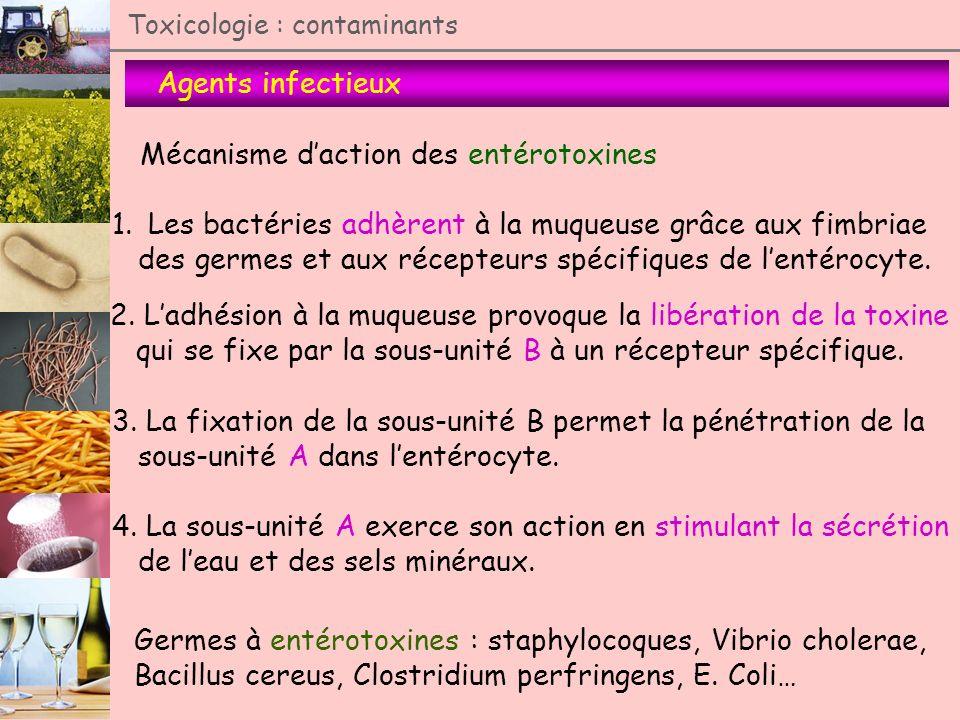 Agents infectieux Toxicologie : contaminants Mécanisme daction des entérotoxines 1.Les bactéries adhèrent à la muqueuse grâce aux fimbriae des germes