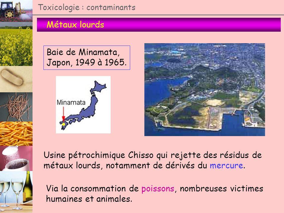 Métaux lourds Toxicologie : contaminants Baie de Minamata, Japon, 1949 à 1965. Usine pétrochimique Chisso qui rejette des résidus de métaux lourds, no