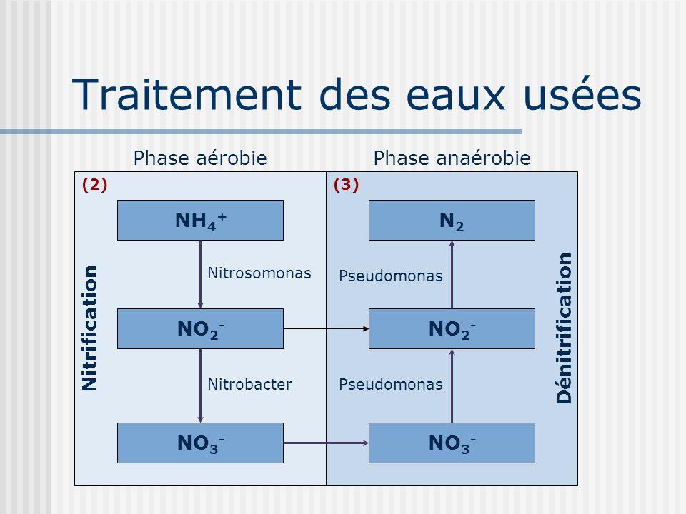 Traitement des eaux usées Phase anaérobiePhase aérobie NH 4 + NO 3 - NO 2 - N2N2 NO 3 - NO 2 - Nitrosomonas Nitrobacter Pseudomonas Nitrification Déni