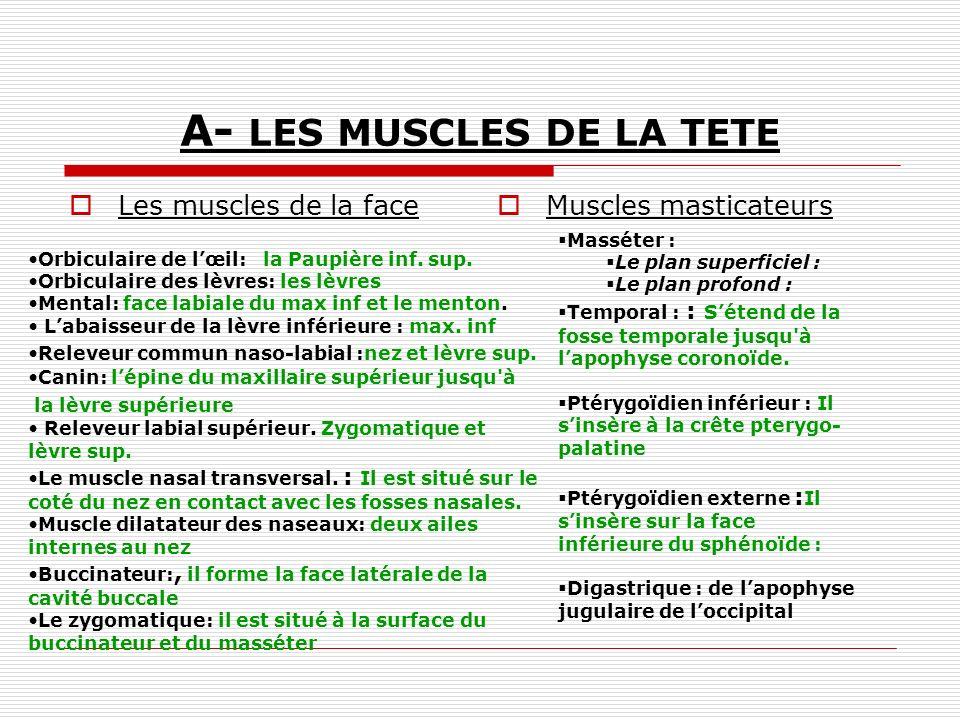 A- LES MUSCLES DE LA TETE Les muscles de la face Muscles masticateurs Orbiculaire de lœil: la Paupière inf. sup. Orbiculaire des lèvres: les lèvres Me