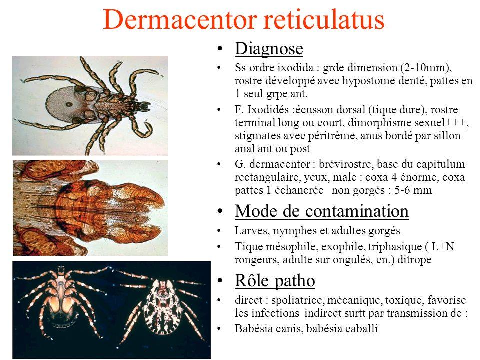 Dermacentor reticulatus Diagnose Ss ordre ixodida : grde dimension (2-10mm), rostre développé avec hypostome denté, pattes en 1 seul grpe ant. F. Ixod