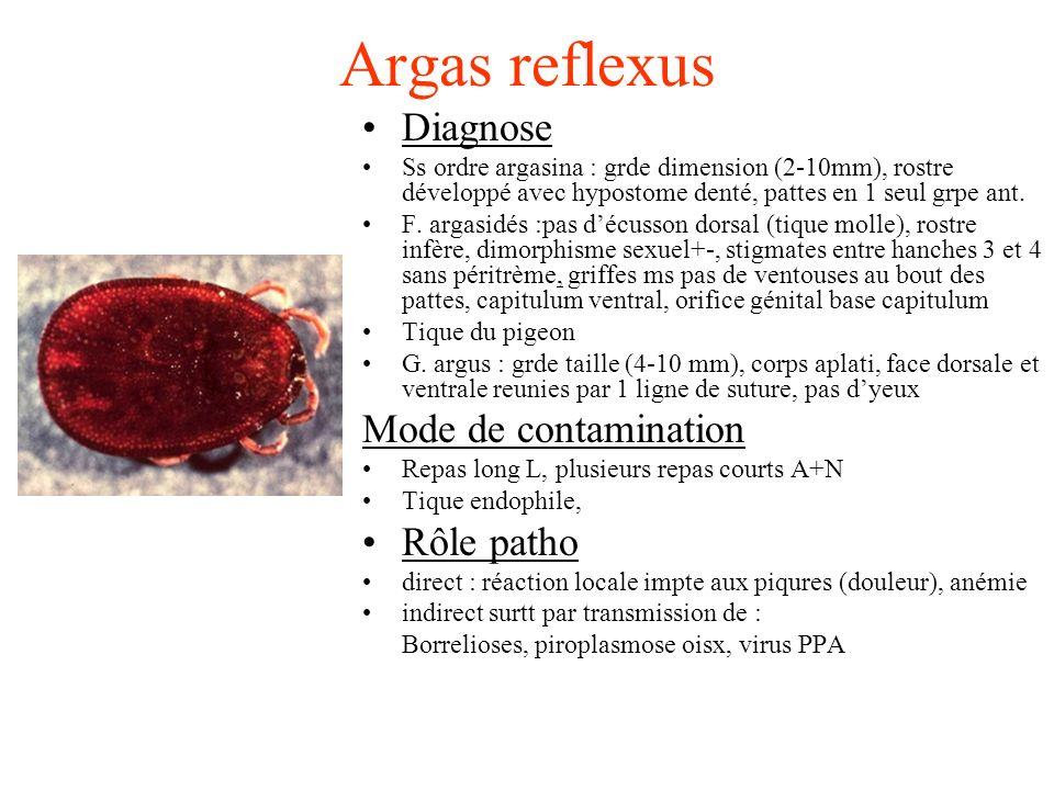 Argas reflexus Diagnose Ss ordre argasina : grde dimension (2-10mm), rostre développé avec hypostome denté, pattes en 1 seul grpe ant. F. argasidés :p