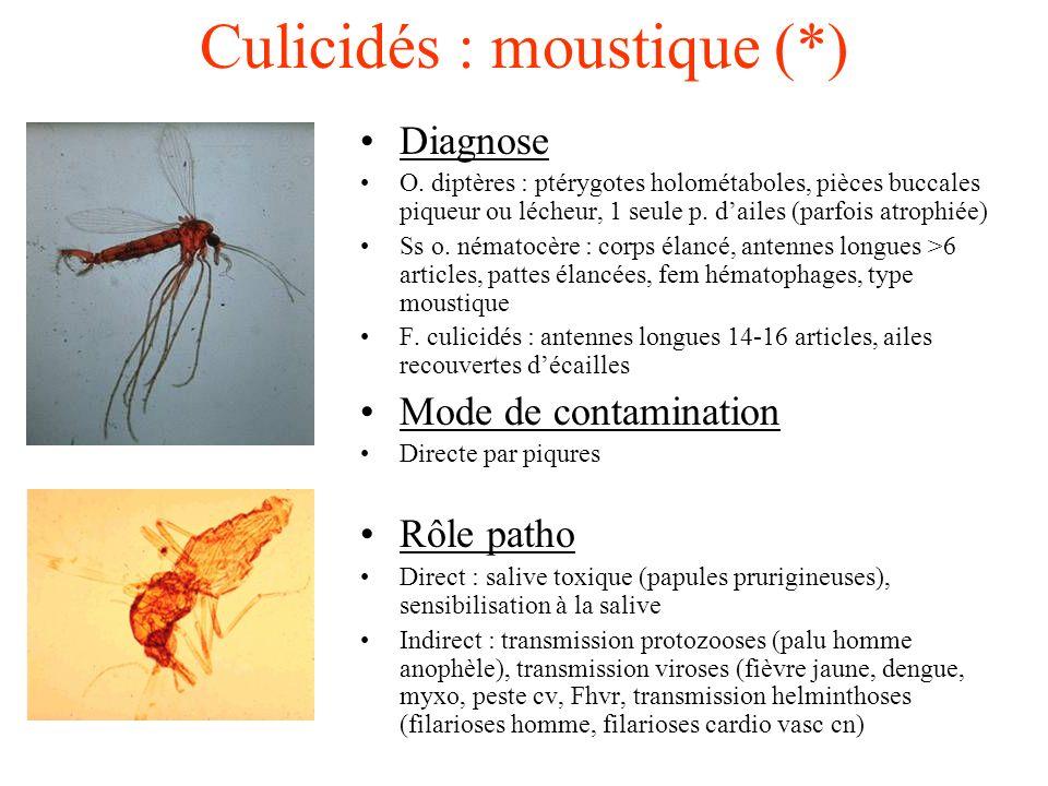 Culicidés : moustique (*) Diagnose O. diptères : ptérygotes holométaboles, pièces buccales piqueur ou lécheur, 1 seule p. dailes (parfois atrophiée) S