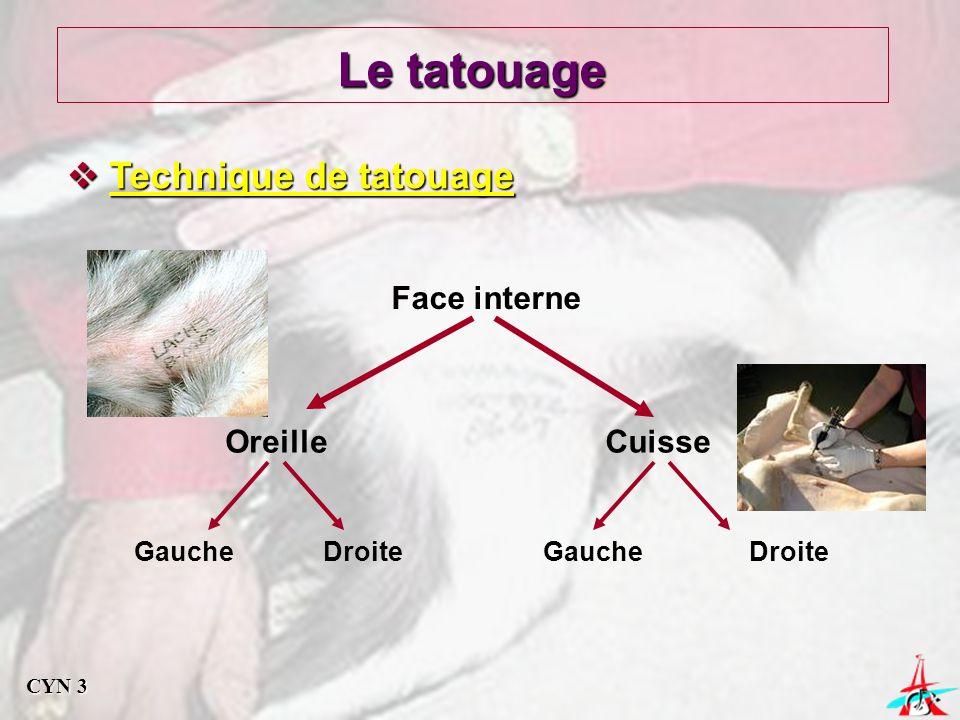 Le tatouage Technique de tatouage Technique de tatouage Face interne OreilleCuisse DroiteGauche Droite CYN 3