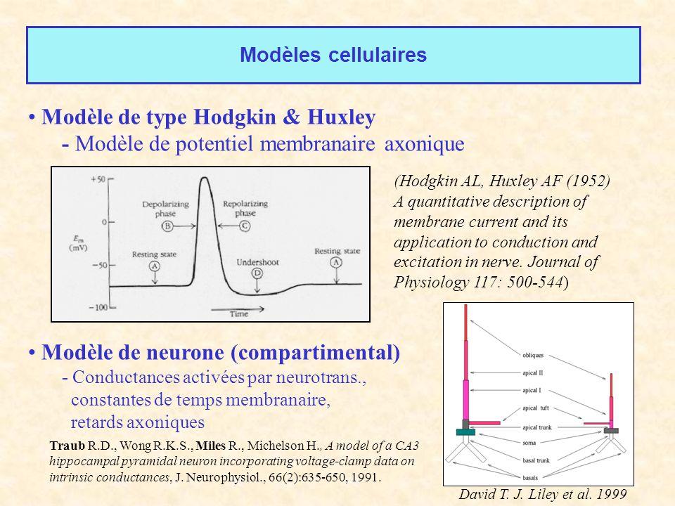 Modèles cellulaires Modèle de type Hodgkin & Huxley - Modèle de potentiel membranaire axonique Modèle de neurone (compartimental) - Conductances activ