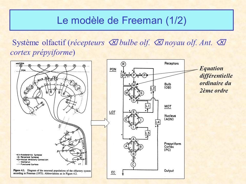 Le modèle de Freeman (1/2) Système olfactif (récepteurs bulbe olf. noyau olf. Ant. cortex prépyiforme) Equation différentielle ordinaire du 2ème ordre