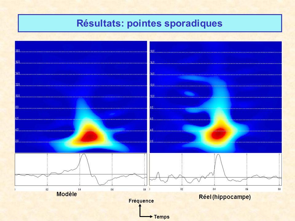 Résultats: pointes sporadiques Réel (hippocampe) Modèle Fréquence Temps