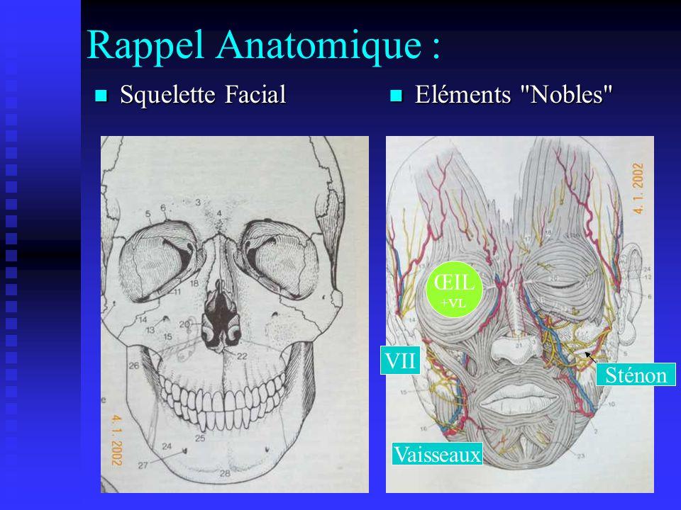 Rappel Anatomique : Squelette Facial Squelette Facial Eléments Nobles ŒIL +VL Sténon VII Vaisseaux