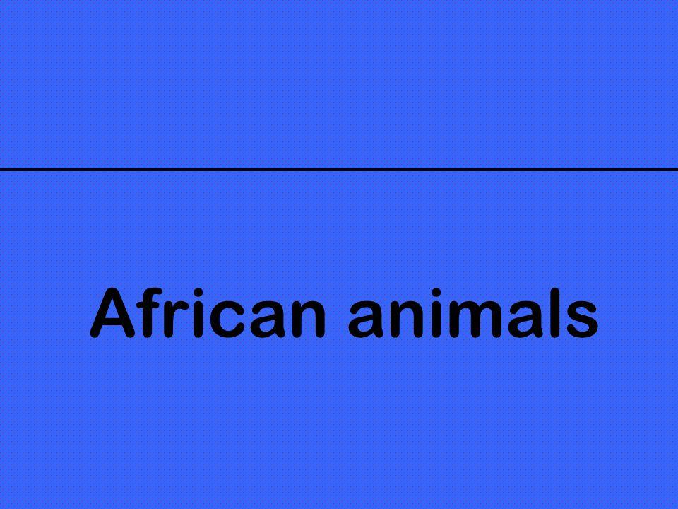 How... He/she/it is! Quest-ce quil est mignon, ce singe ! Quest-ce quelle est petite, cette hyène!