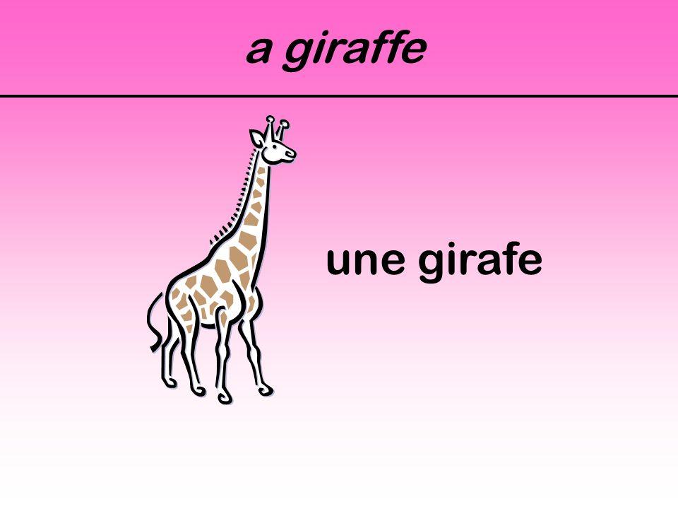 A gazelle une gazelle