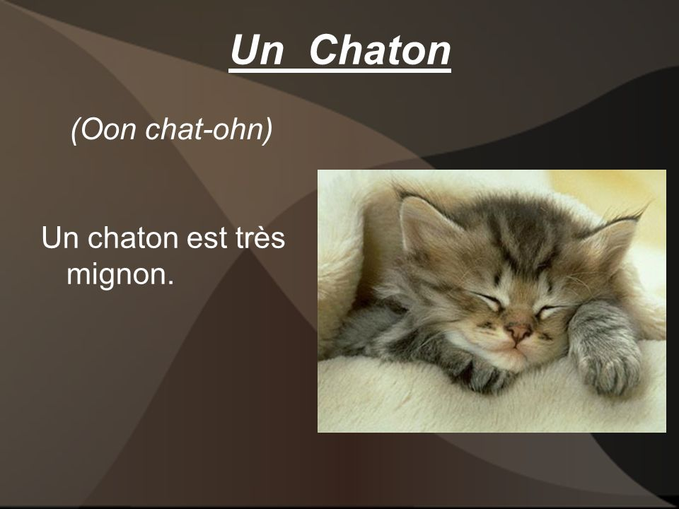 Un Chaton Un chaton est très mignon. (Oon chat-ohn)