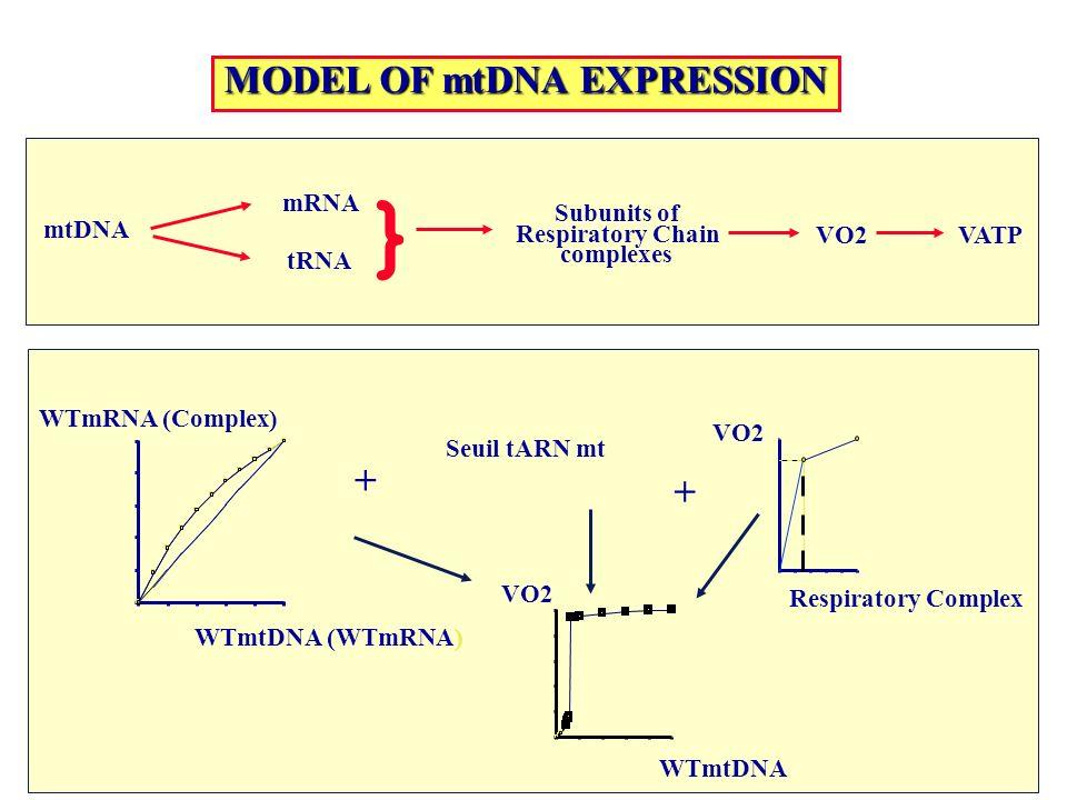 mtDNA tRNA mRNA } Subunits of Respiratory Chain complexes VO2VATP MODEL OF mtDNA EXPRESSION Respiratory Complex VO2 WTmtDNA (WTmRNA) WTmRNA (Complex)
