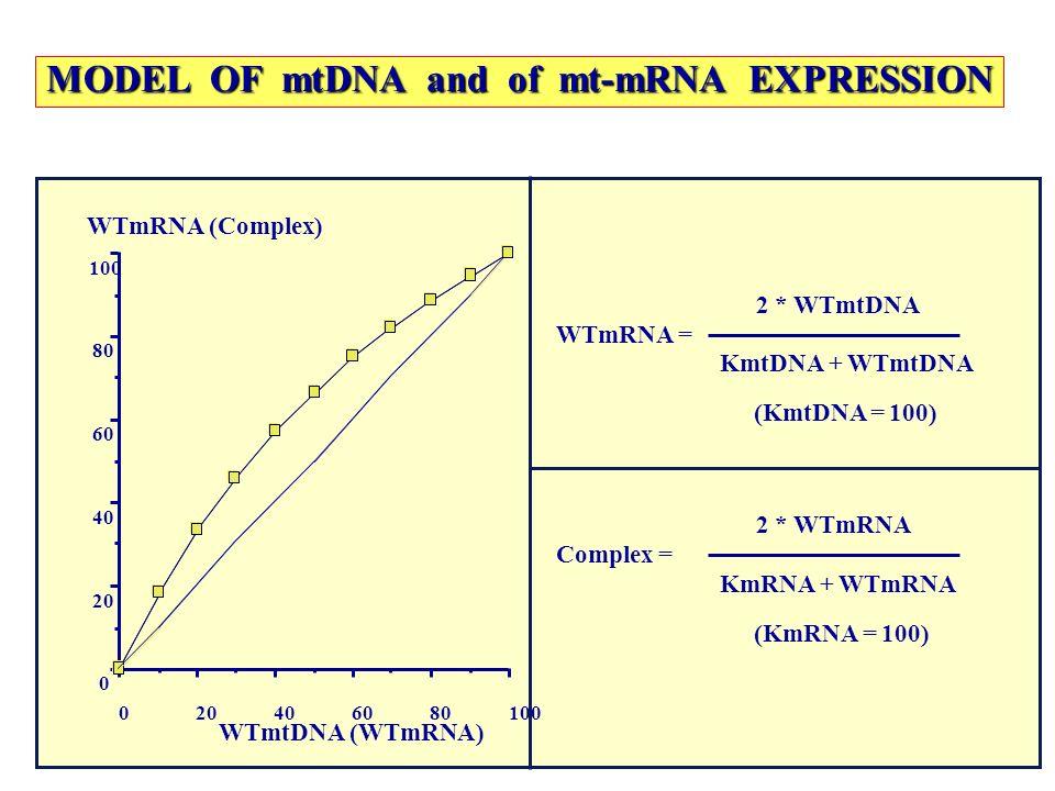 100806040200 0 40 60 80 100 WTmtDNA (WTmRNA) WTmRNA (Complex) MODEL OF mtDNA and of mt-mRNA EXPRESSION WTmRNA = 2 * WTmtDNA KmtDNA + WTmtDNA (KmtDNA =